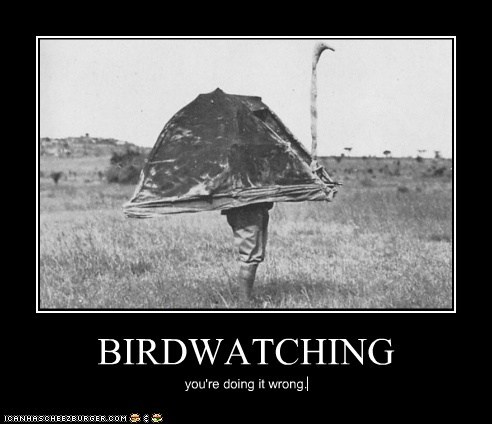 BIRDWATCHING you're doing it wrong.