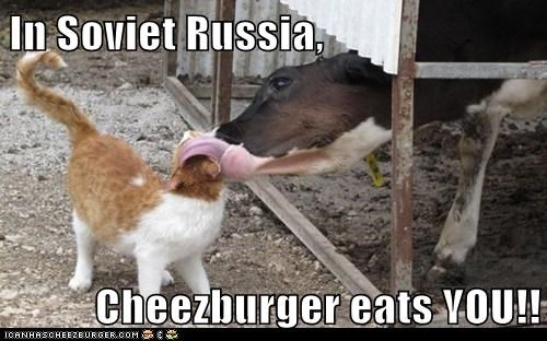 Cheezburger Image 6448479744