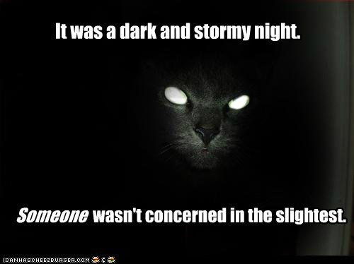 It was a dark and stormy night. Someone wasn't concerned in the slightest.