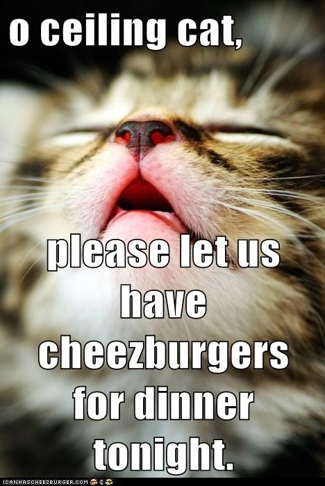 Cheezburger Image 6448914944