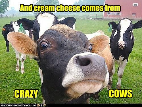 Cheezburger Image 6448953856