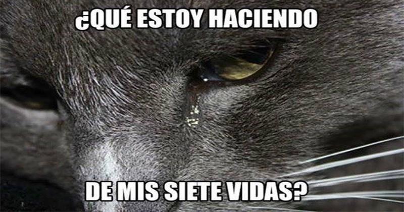 filosofos gatos