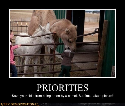 camel,eating,hilarious,kid,priorities