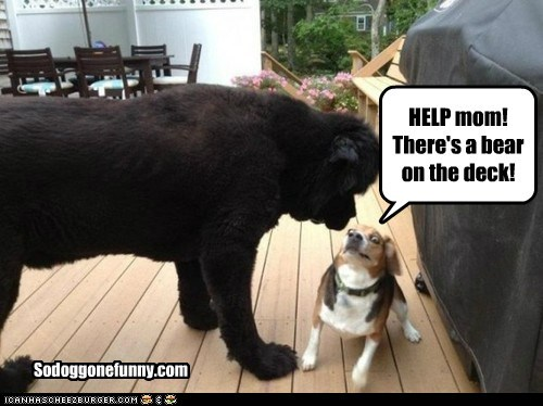 HELP mom! There's a bear on the deck! Sodoggonefunny.com