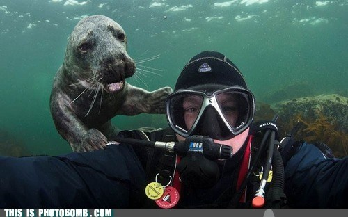 animal,Animal Bomb,arf,best of week,seal,underwater