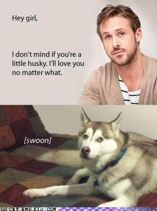 dogs,hey girl,husky,Ryan Gosling,swoon,weird kid