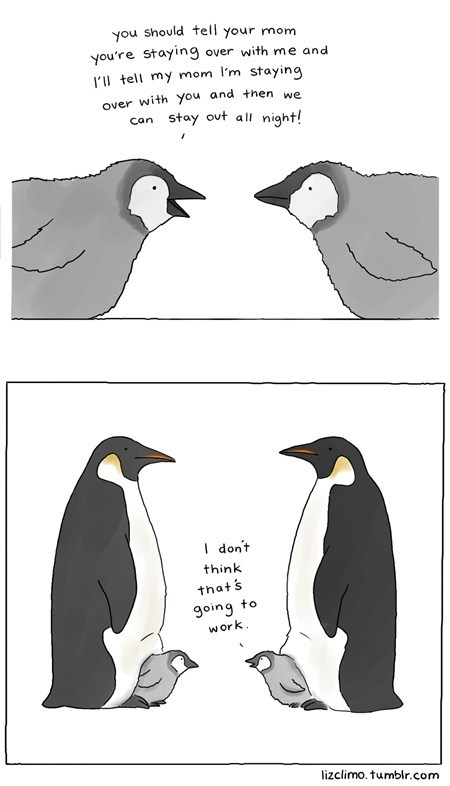 BFFs penguins sleep overs the internets - 6450912768