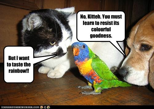 beagle,bird,cat,dogs,parrot,resist,taste the rainbow