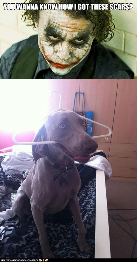 batman,coat hangers,dogs,heath ledger,scars,the joker
