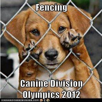 Fencing  Canine Division Olympics 2012