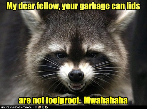 evil,fellow,foolproof,garbage can,mwahahahahahaha,plan,ploting,raccoon