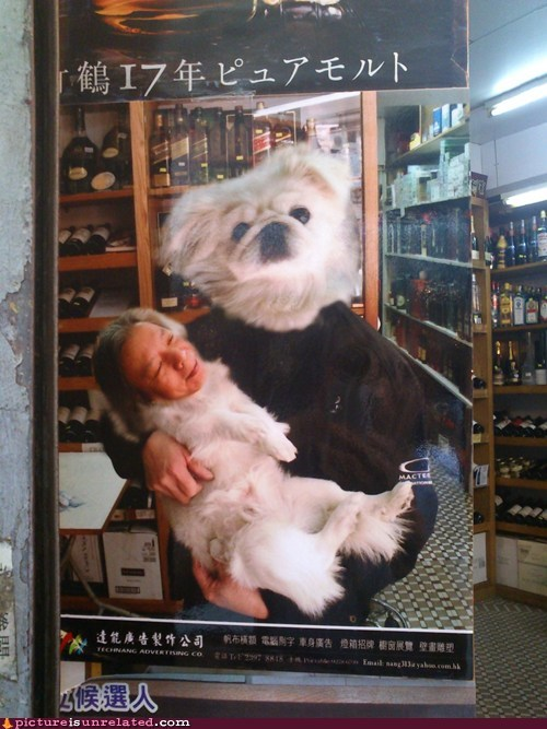 Ad,dogs,shopped pixels,wine,wtf