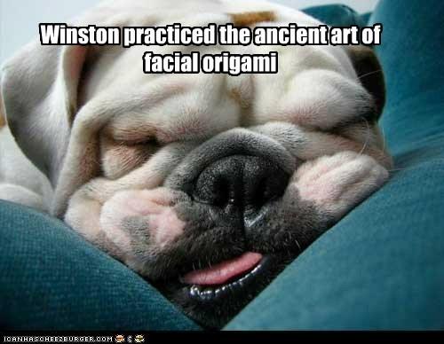 dogs english bulldog folds origami wrinkles - 6452053760