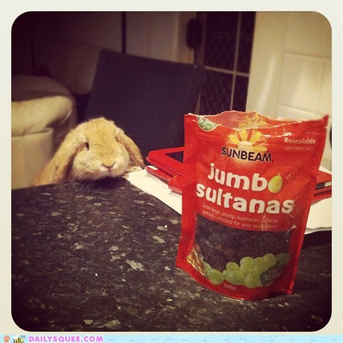 bunny happy bunday pet rabbit raisins reader squee squee - 6452242176