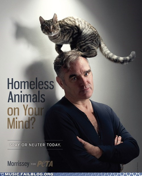 cat heads morrissey peta - 6452296192