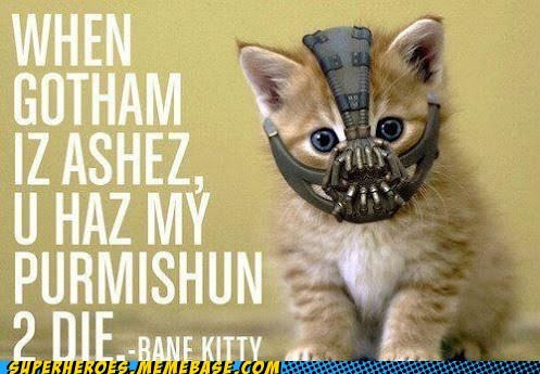bane cat cute dark knight Super-Lols