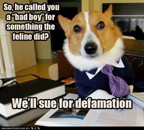 bad cat corgi dogs Lawyer Dog lies - 6452544768