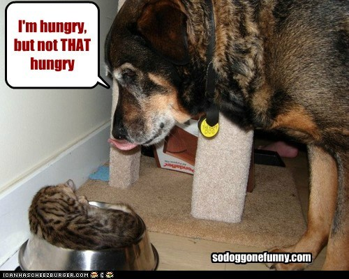 I'm hungry, but not THAT hungry sodoggonefunny.com