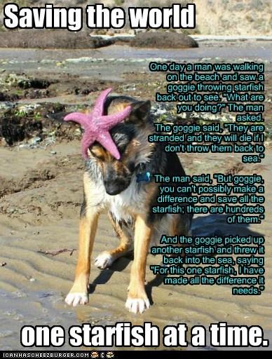 Cheezburger Image 6452665344