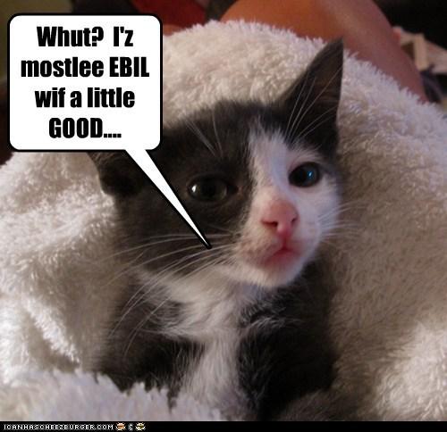 basement cat captions Cats ceiling cat evil fur good kitten pattern - 6452679680