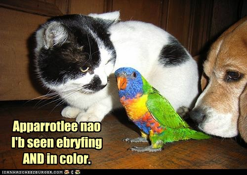 apparently,cat,color,dogs,everything,parrot,pun