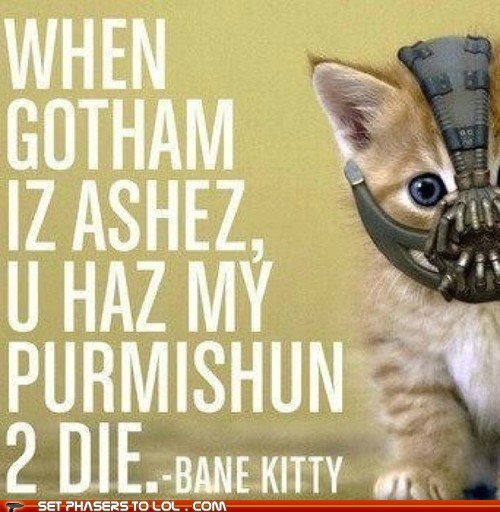 ashes,bane,batman,best of the week,cute,gotham,I Can Has Cheezburger,lolcat,lolspeak,mask,the dark knight rises