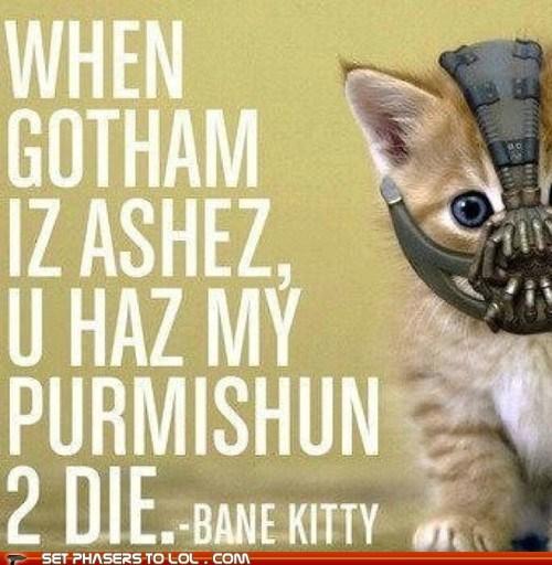 ashes bane batman best of the week cute gotham I Can Has Cheezburger lolcat lolspeak mask the dark knight rises - 6453076736