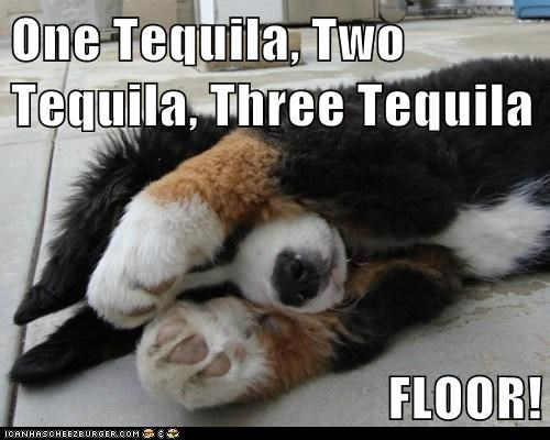 One Tequila, Two Tequila, Three Tequila FLOOR!