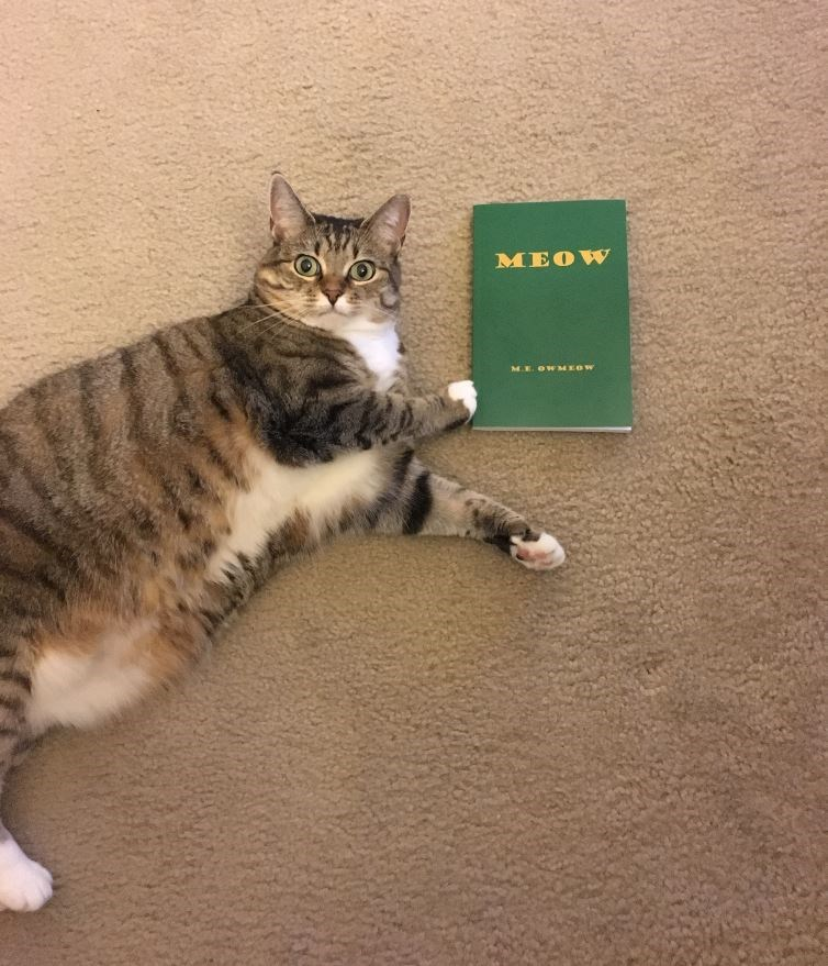 book for cats