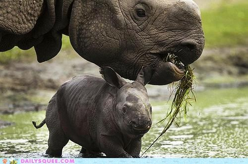 baby mommy mud puddles rhino rhinoceros - 6453362688