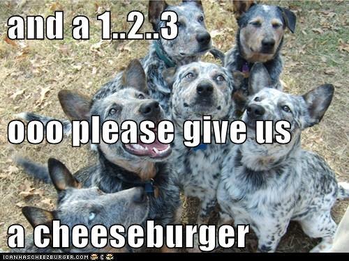 Cheezburger Image 6453430272