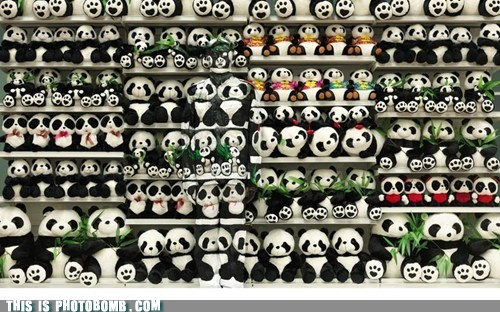 best of week hidden panda when you see it