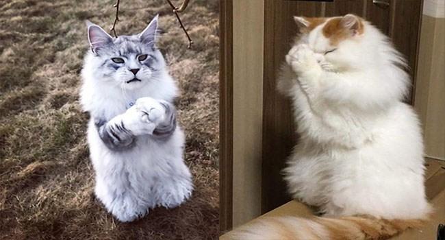 funny cat praying pics