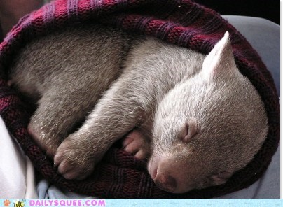 baby hat nap sleeping squee spree Wombat - 6453760768