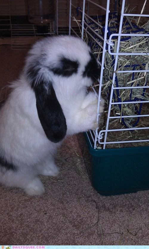 bunny grass happy bunday noms pet rabbit reader squee - 6454494208