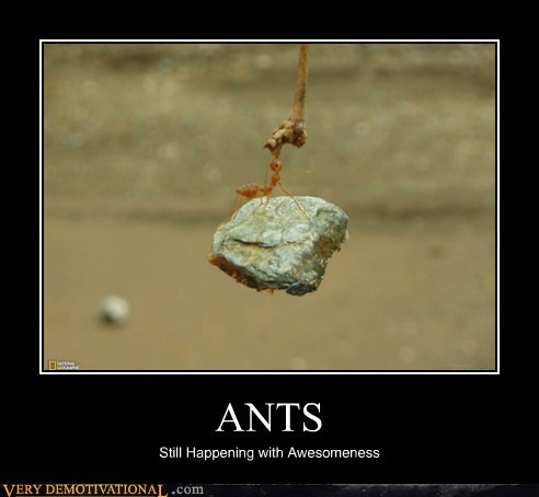 strong awesome ants - 6454650112