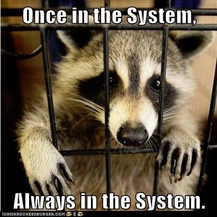 jail,prison,racoon,Sad,system,vicious cycle