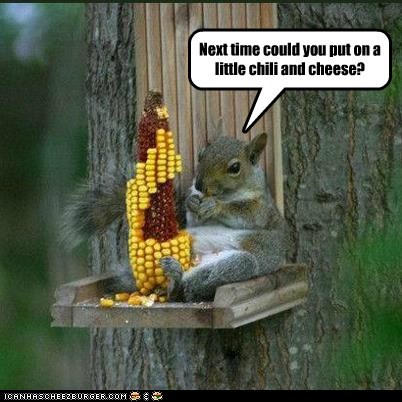 cheese chili corn eating foodie request squirrel