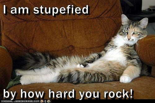 I Am Stupefied By How Hard You Rock Lolcats Lol Cat Memes