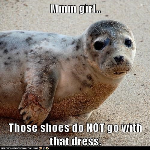 advice,catty,dress,fashion,girl,seal,shoes