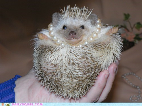 hedgehogs pearls pet pretty girl reader squee squee - 6455113984