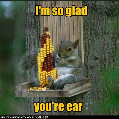 corn corny ear glad here kernels pun squirrel - 6455311360