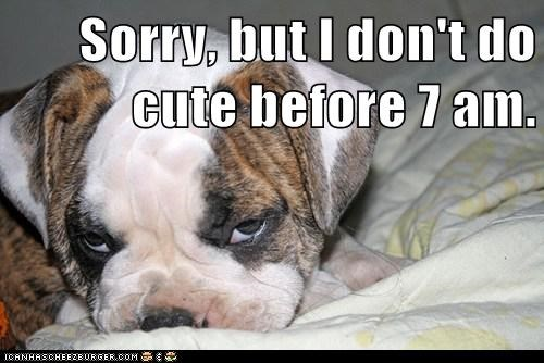 bulldog cute dogs not a morning person puppy too early - 6455494144