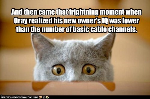 brain,cable,captions,Cats,dumb,IQ,smart,TV