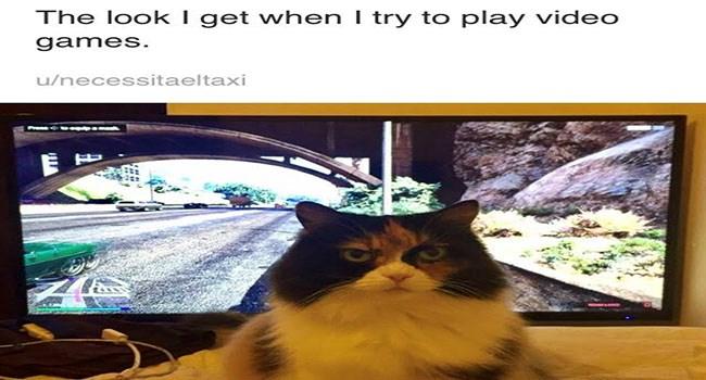 hilarious lolz cute Memes cute cats lol funny cats Cats funny cat memes - 6455557