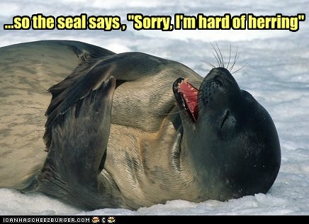 hard of hearing,herring,joke,laughing,rofl,seal