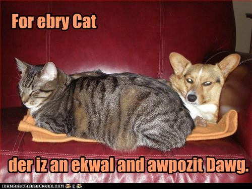 captions Cats corgi dogs equal and opposite reacti equal and opposite reaction physics