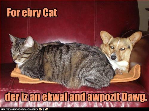 captions Cats corgi equal and opposite reacti physics - 6455695104