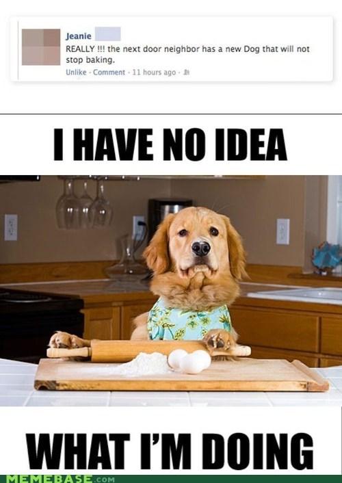 baking barking dogs Memes typo - 6455783680