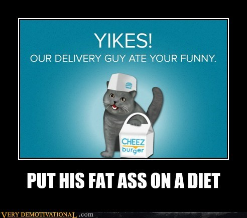 cat,delivery guy,funny,hilarious,meta